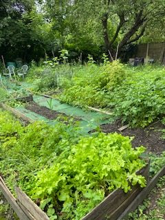 Allotment Plots Doctors Lane - Click to open full size image